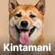 Kintamani – Dog Breeder & Adoption Elementor Template Kit - ThemeForest Item for Sale