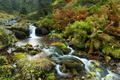 Wild river flowing in untouched green nature in autumn - PhotoDune Item for Sale