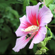 Bee Collecting Nectar on a Flower in the Spring - VideoHive Item for Sale