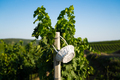 white wicker basket hanging on a pole in vineyard - PhotoDune Item for Sale