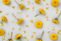 Pattern with yellow dandelion flowers - PhotoDune Item for Sale