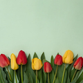 A bunch of pink and yellow tulips on a green background - PhotoDune Item for Sale