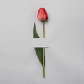 Elegant red or pink tulip on a grey background - PhotoDune Item for Sale
