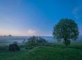 Twilight misty field landscape at summertime. - PhotoDune Item for Sale