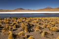 Sunrise view of Laguna de Canapa with flamingo, Bolivia, Altiplano - PhotoDune Item for Sale