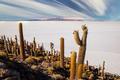 Big cactus on Incahuasi island, salt flat Salar de Uyuni, Altiplano, Bolivia - PhotoDune Item for Sale