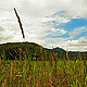 Summer Landscape - VideoHive Item for Sale