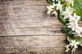 Jasmine flower on wooden table - PhotoDune Item for Sale