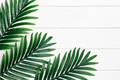 Tropical palm dark green leaves frame on white painted wooden boards - PhotoDune Item for Sale