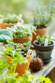 Various organic herbs in a clay pots on the balcony, mint, basil, rosemary - PhotoDune Item for Sale