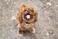 Happy dog portrait - PhotoDune Item for Sale
