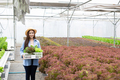 Happy asian female farmer holding a basket of vegetables in hydroponic farm. - PhotoDune Item for Sale