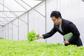Businessmen examine quality reports of organic vegetables. - PhotoDune Item for Sale