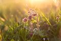 Idyllic spring meadow - PhotoDune Item for Sale