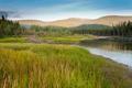 Beaver Castor canadensis lodge in taiga wetlands - PhotoDune Item for Sale