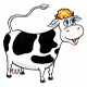Cow Moo