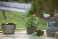 Gardening tools and flowers on a table. - PhotoDune Item for Sale