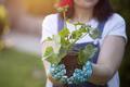 Woman holding plant, shallow dof - PhotoDune Item for Sale