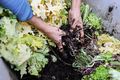Farmer man holding compost with worms - Main focus on right hand - PhotoDune Item for Sale