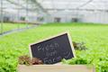 Organic vegetables fresh from farm. - PhotoDune Item for Sale