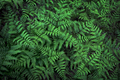 Fern with green leaves background - PhotoDune Item for Sale