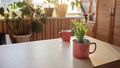 Cup of coffee and mug with green blooming flower on windowsill in the morning, home floral decor - PhotoDune Item for Sale