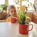 Girl drinking coffee and enjoying green blooming flower replanted in red mug, home floral decor - PhotoDune Item for Sale
