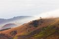 Bad weather fogs on Otago peninsula landscape, NZ - PhotoDune Item for Sale