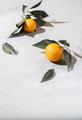 Whole oranges witl orange tree leaves on white background copy space - PhotoDune Item for Sale