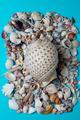 Sea shells on blue background. minimalistic summer bacground - PhotoDune Item for Sale