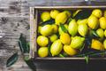 Full box of fresh lemons. Top view, copy space - PhotoDune Item for Sale