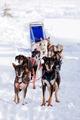 Dog Sled - PhotoDune Item for Sale