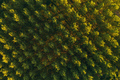 Aerial view of cottonwood treetop pattern from drone pov - PhotoDune Item for Sale