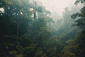Misty Rainforest of Costa Rica - PhotoDune Item for Sale