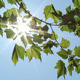 Leaves And Sunlight - VideoHive Item for Sale