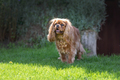 Happy dog in the garden - PhotoDune Item for Sale