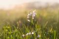 Springtime meadow - PhotoDune Item for Sale