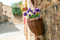 Flower in a pot, decoration on the street - PhotoDune Item for Sale