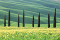 Row of cypress trees, Tuscany - PhotoDune Item for Sale