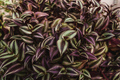 Red purple leaves natural background. Copy space. - PhotoDune Item for Sale