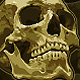 Two Anatomic Vector Skulls - GraphicRiver Item for Sale