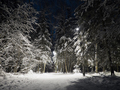 Illuminated winter forest at night - PhotoDune Item for Sale