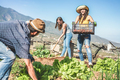 Teamwork harvesting fresh vegetables in the community greenhouse garden - PhotoDune Item for Sale