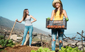 Young women harvesting organic fruits in community greenhouse garden - Happy people at work - PhotoDune Item for Sale