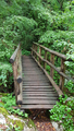 Wooden bridge and Path in the forest - PhotoDune Item for Sale