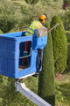 Gardener pruning a cypress tree with a chainsaw and a crane - PhotoDune Item for Sale