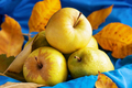 Harvest of pears and apples on blue fabric surrounded by autumn leaves - PhotoDune Item for Sale