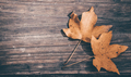 Autumn leaf on wood black background (top view) - PhotoDune Item for Sale