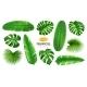 Tropical Leaves Set Exotic Summer Foliage Design - GraphicRiver Item for Sale