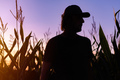 Silhouette of satisfied male farmer standing on cornfield - PhotoDune Item for Sale